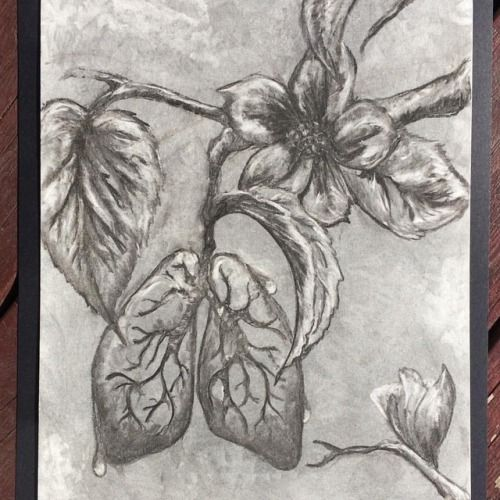 Lung flowers!  #babysbreath perhaps? Terrible puns make... -  Lung flowers!  #babysbreath perhaps? Terrible puns make the world go round. Up for grabs. #stephbuxtonart #surreal #flowers #charcoal #waterdrops #lungs #anatomy (at Edmonton Alberta)