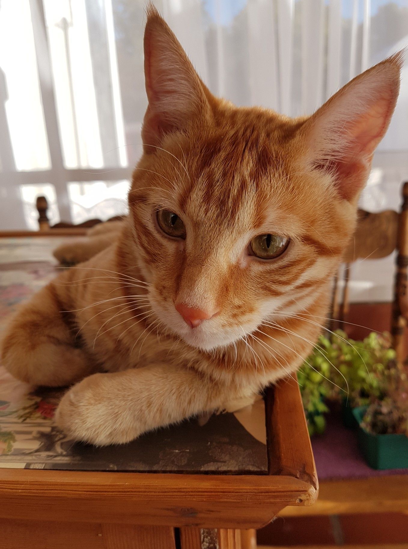 Pin By Evelda Kruger On My Ginger Babies Ginger Babies Kitty Cats