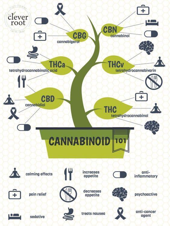 Pin by G  M on med links | Medical cannabis, Marijuana