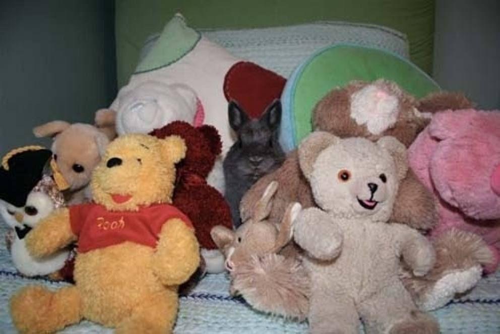 Dov'è finito il gatto? 24 animali domestici che si mimetizzano perfettamente - Corriere.it