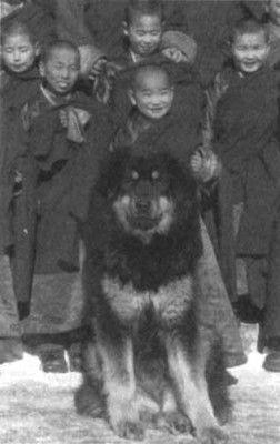Tuva Tibeti