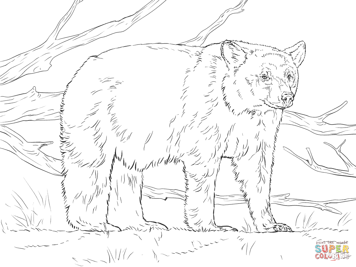 Realistic American Black Bear Coloring Page Supercoloring Com Polar Bear Coloring Page Bear Coloring Pages Animal Coloring Pages