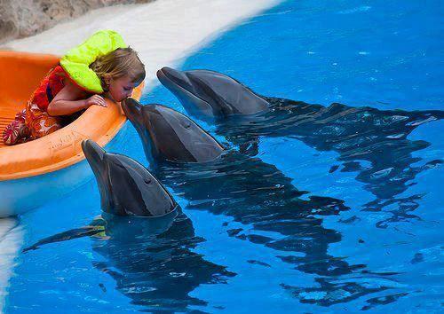Dophins.... que bellos animales!