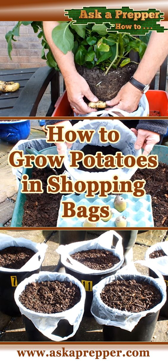 How to Grow Potatoes in Shopping Bags for an Extended Harvest is part of Growing potatoes, Food garden, Garden harvest, Planting potatoes, Veg garden, Veggie garden - Harvesting your potatoes in bags is not only a good way to grow them in small spaces, but it can also extend the harvest time  In addition, it's also helpful