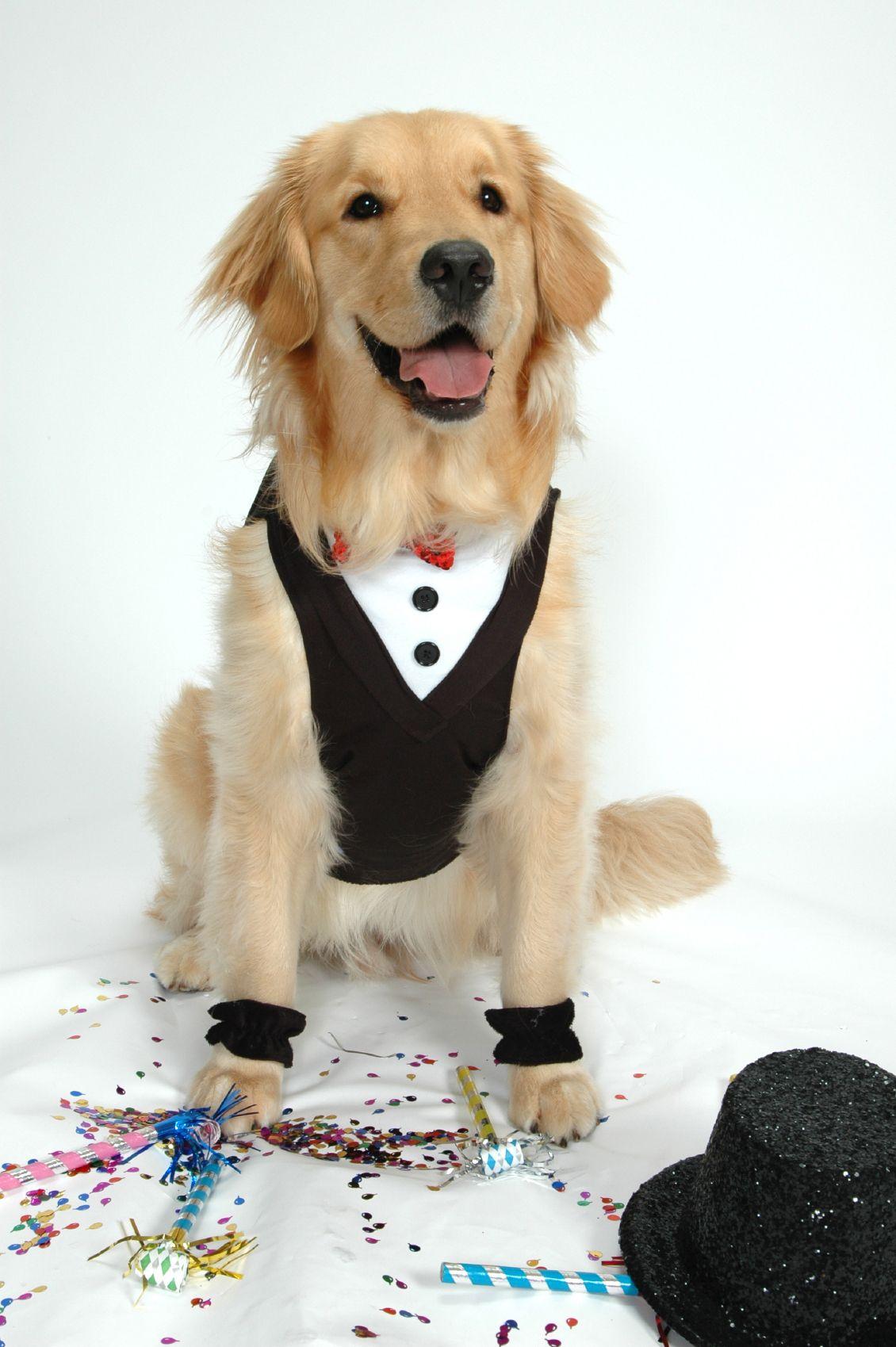 A Veterinarian S Top 10 New Year S Resolutions Puppy Halloween Costumes Pet Halloween Costumes Dog Halloween Costumes