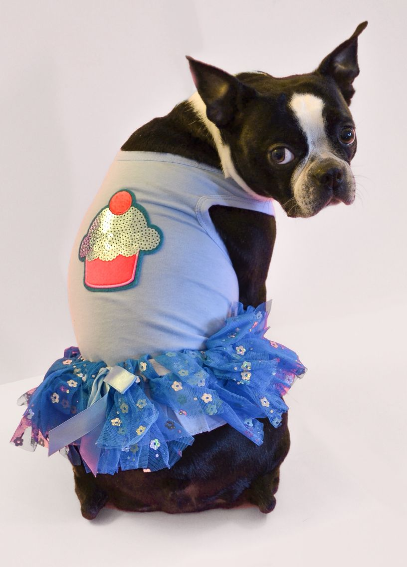 Who has summer birthdays??? I do I do!!!!  This Sequin Cupcake dress is one of my most popular Birthday dresses. Starting at $19.99 www.fetchdogfashions.com And totally customizable through my Etsy store starting at $32.99 http://www.etsy.com/shop/FetchDogFashions  #socute #etsy #dog #bostonterrier