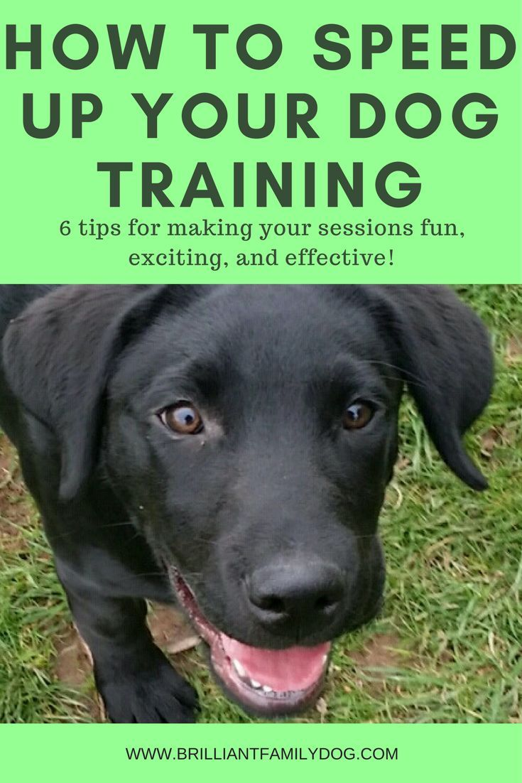 How To Speed Up Your Dog Training 6 Tips For Making Your Sessions Fun And Fruitful Brilliant Family Dog Dog Training Tips Training Your Dog Dog Training