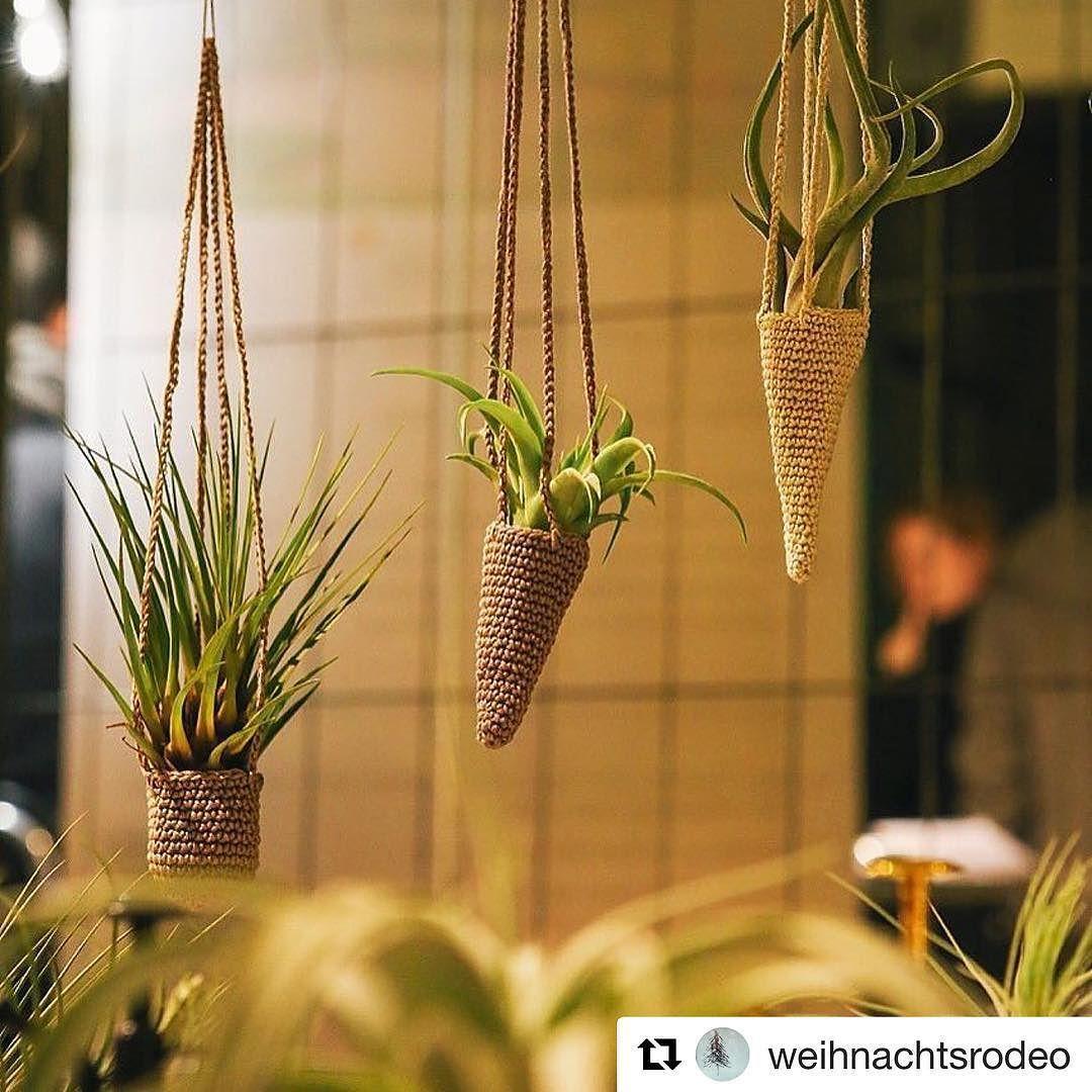 Luftpflanzen Berlin xmas time is coming @weihnachtsrodeo #tillherbacaeli #tillandsia