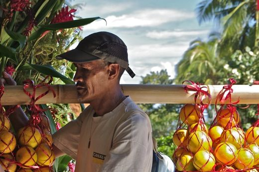 Les porteurs d'oranges ... - recif tapete