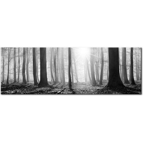 Waldfoto auf eingewickelter Leinwand East Urban Home Größe: 50 cm H x 150 cm B x 150 cm B x T