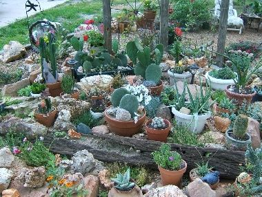 Share Photos : Gardening:Potted Cactus Garden | Rock ...