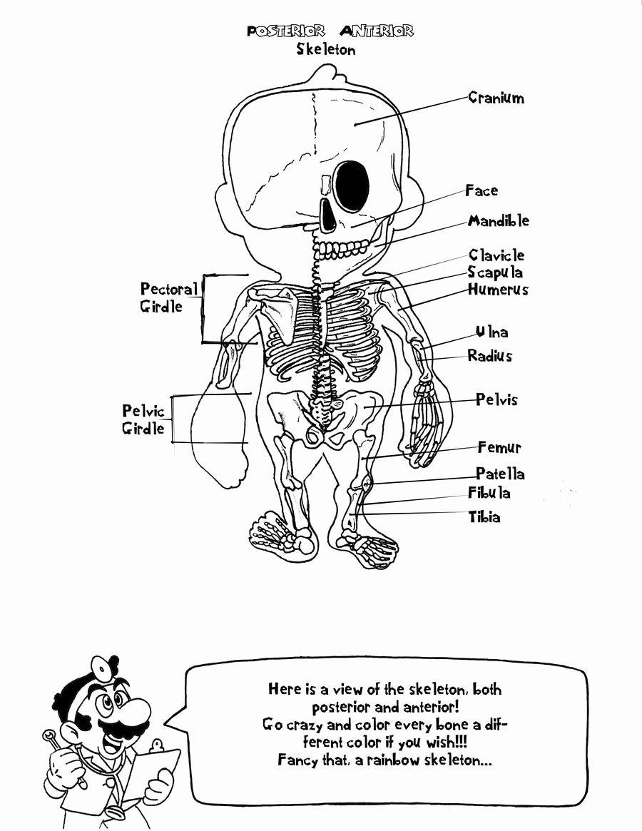 Anatomy Coloring Books Unique Doctor Mario S Anatomy Coloring Book Page 4 By Ambrosianburbank On De Anatomy Coloring Book Skull Coloring Pages Color Worksheets