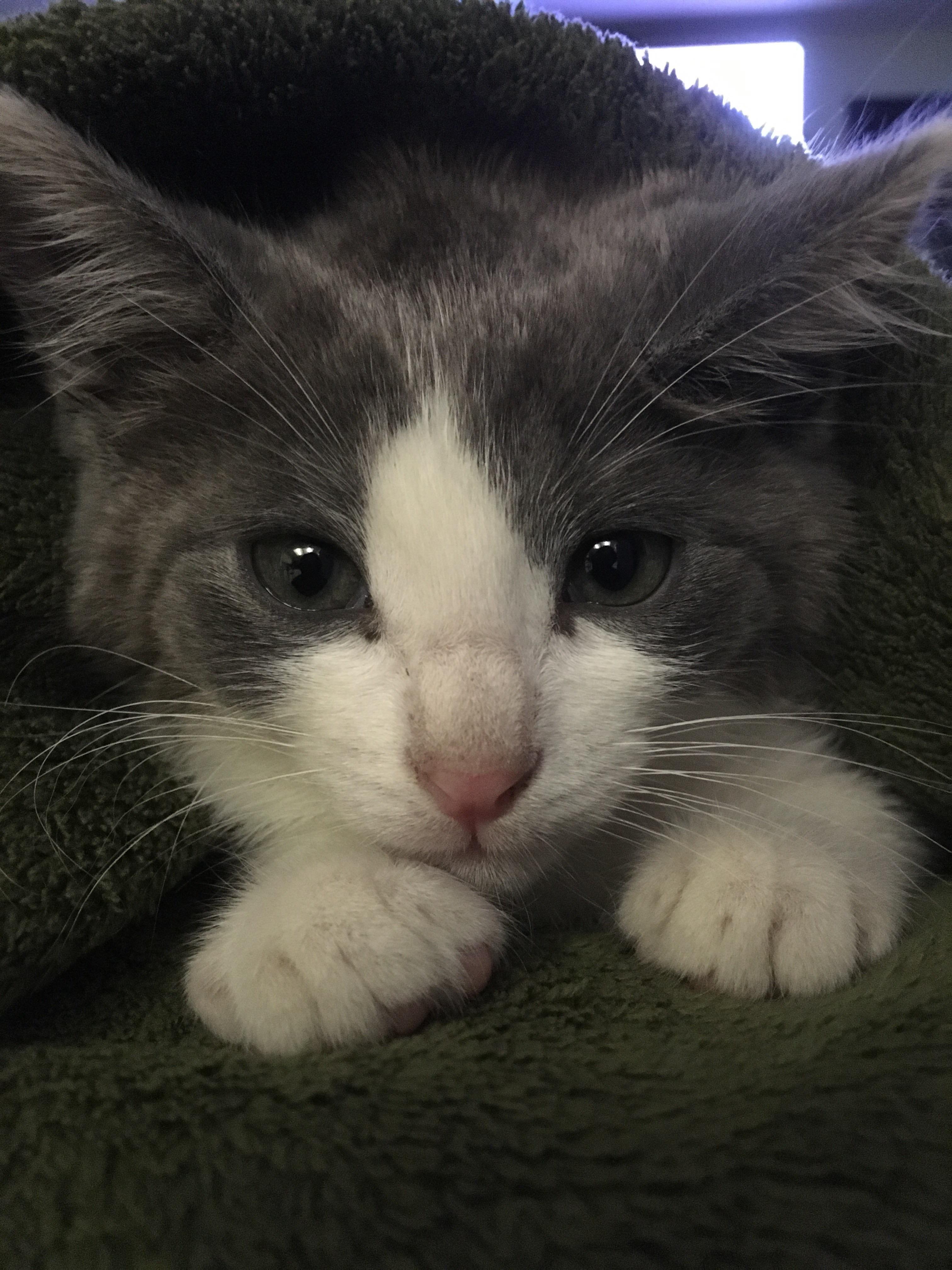 Got A New Roommate Names John Rambo Cats And Kittens Here Kitty Kitty I Love Cats