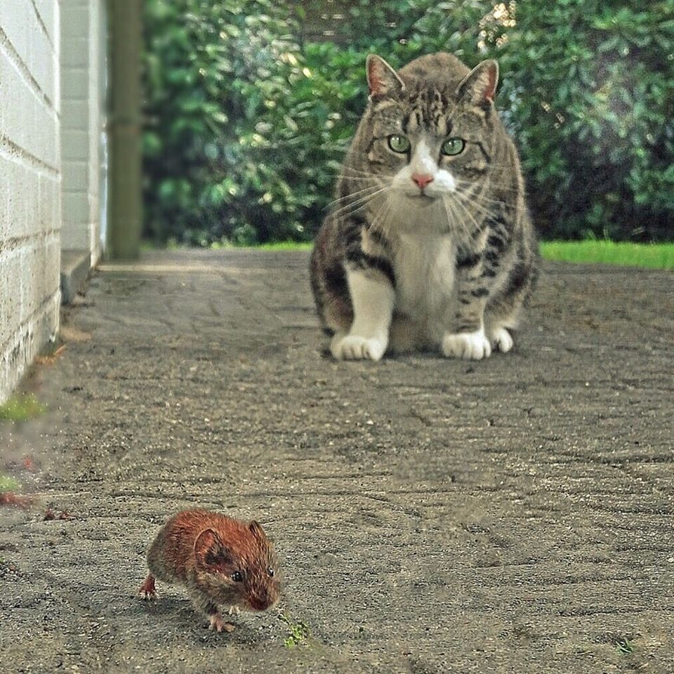 """Foto von berga51: """"Maus blieb heile..."""""""