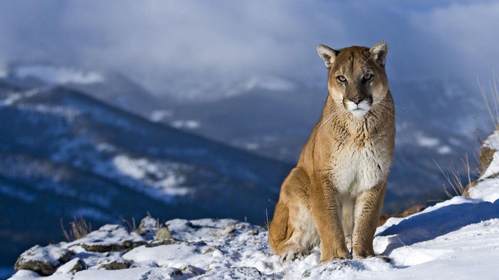 Puma Hd P Wallppers Download