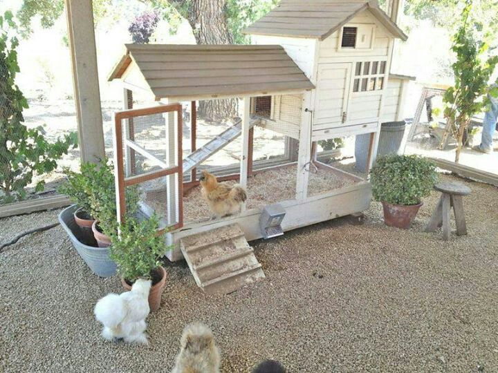 Need To Do This With My Silkie Coop Patina Farm Backyard