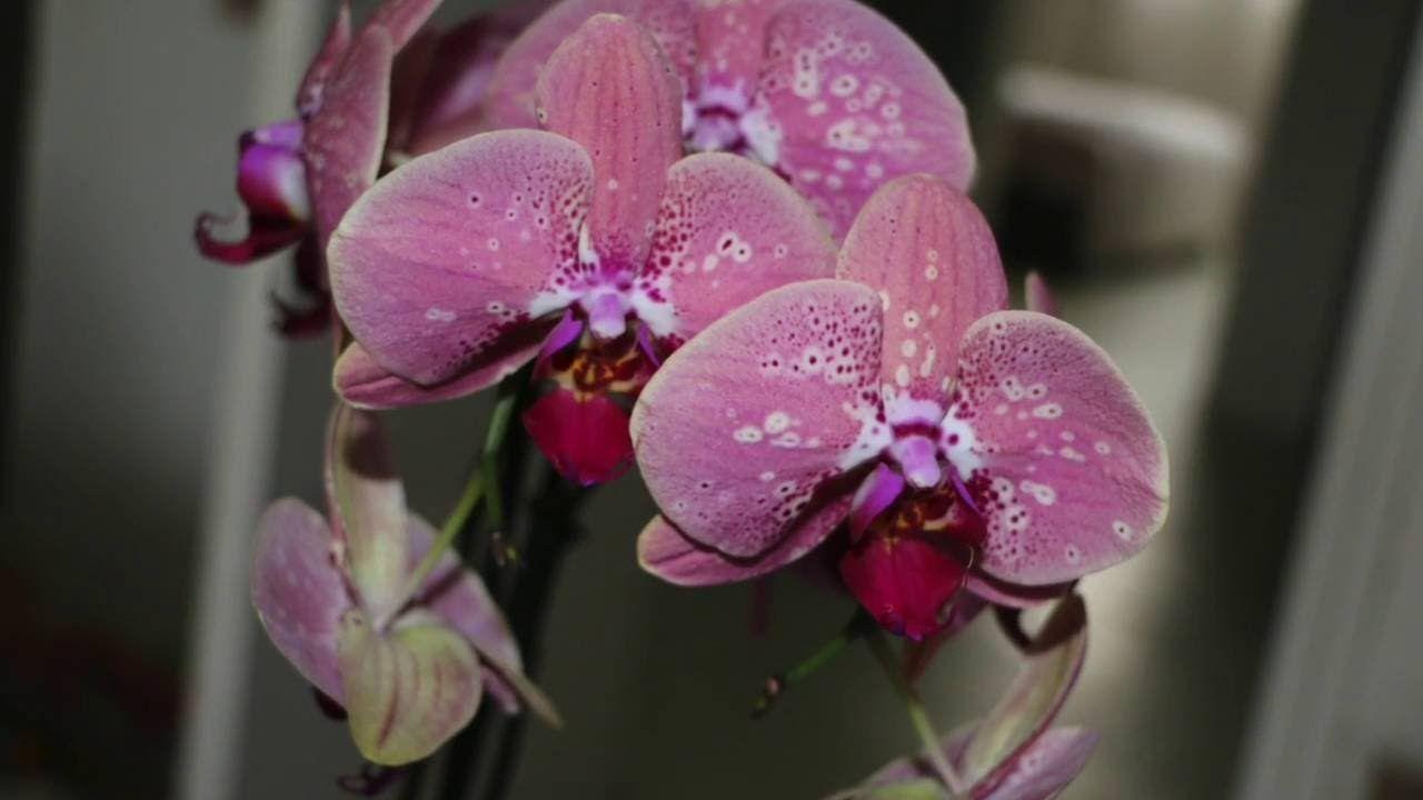 Ne Jetez Pas Votre Orchidee Orchidees Pinterest