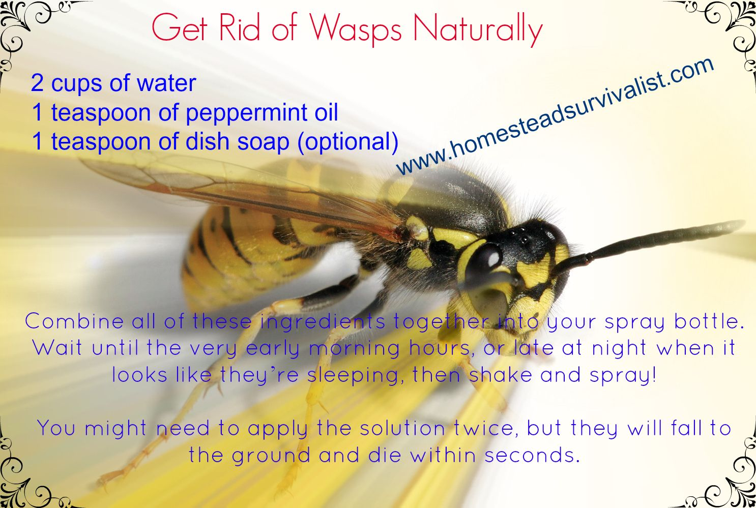 Get rid of wasps naturally from my homestead gallery