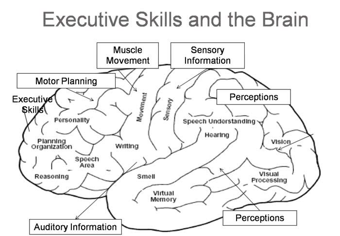 Image result for executive function skills checklist