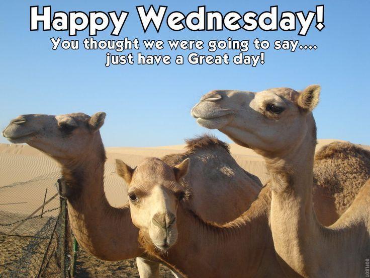 Happy+Wednesday+wednesday+hump+day+hump+day+camel ...