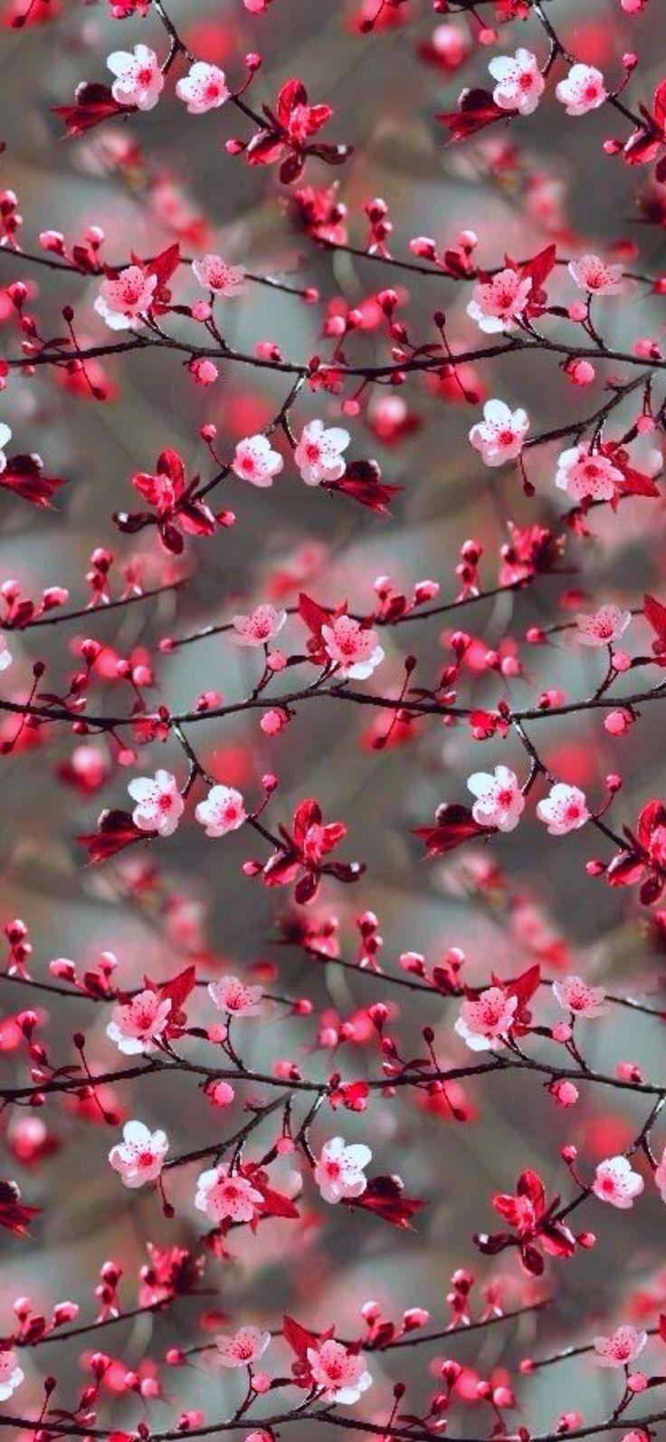 Me encantan las flores . 😁😍 629729960379068089 Beautiful