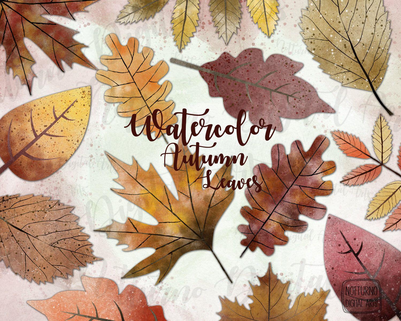 Agapanthus Foglie Gialle acquerello foglie d'autunno. foglie arancioni e gialle. set