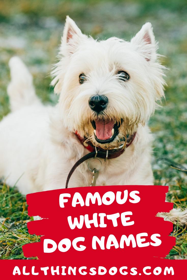 Famous White Dog Names Dog Names White Dogs White Puppies