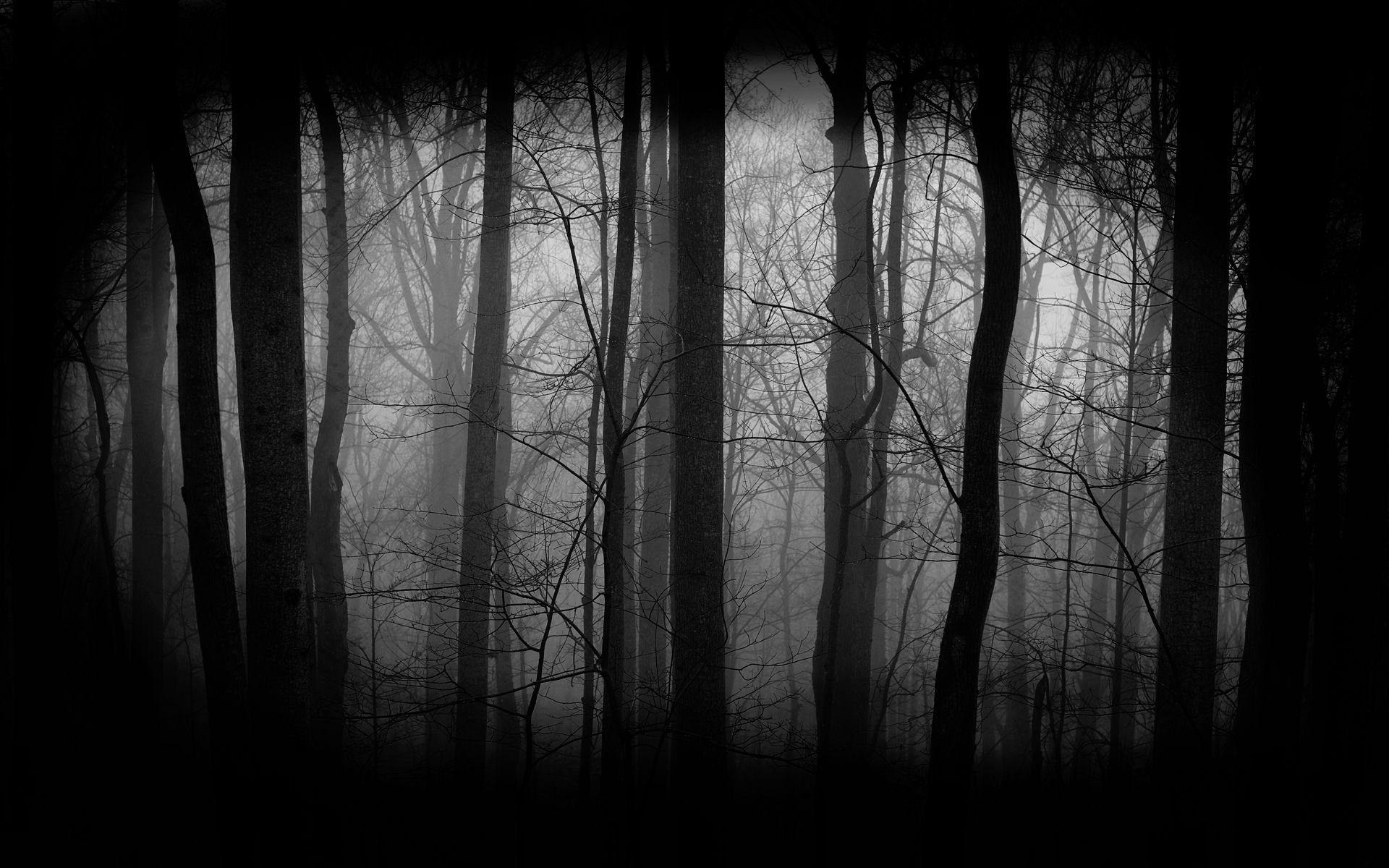 Dark Forest HD Wallpaper Widescreen F23426d01x