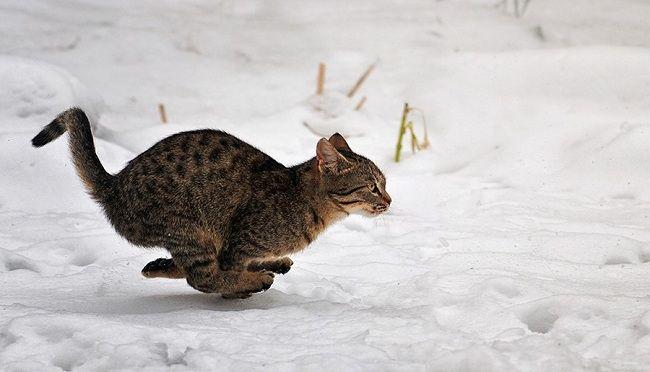 Você Já Notou Que os Gatos Nem Sempre São Gatos?
