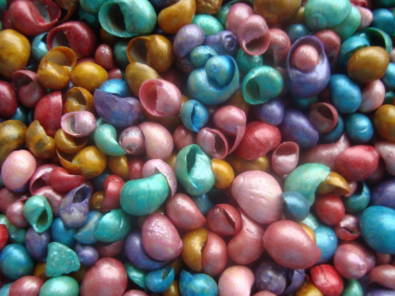 Dyed Littorina Seashells | Shabby Crabby