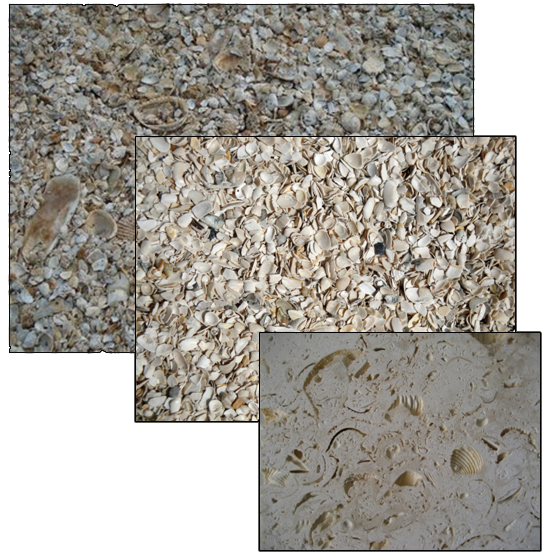 stucco glue images of tabby finish stucco shell landscape shell bulk