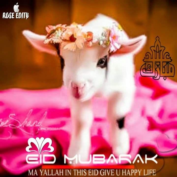 Pin By Sayma Balluwala On Dp Eid Mubarak Wishes Eid Images Eid Mubarak Animation
