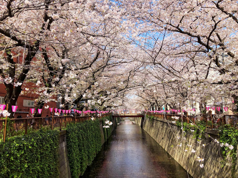 Pin Op Japan 2022 Trip