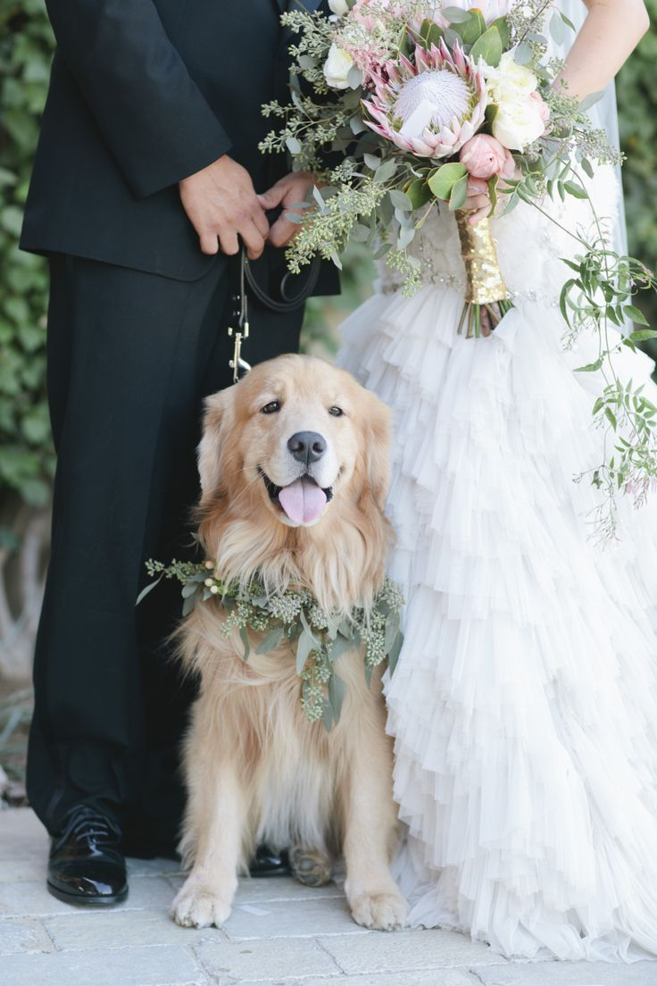 Golden Retriever Seeded Eucalyptus Flower Collar Wedding Dogs
