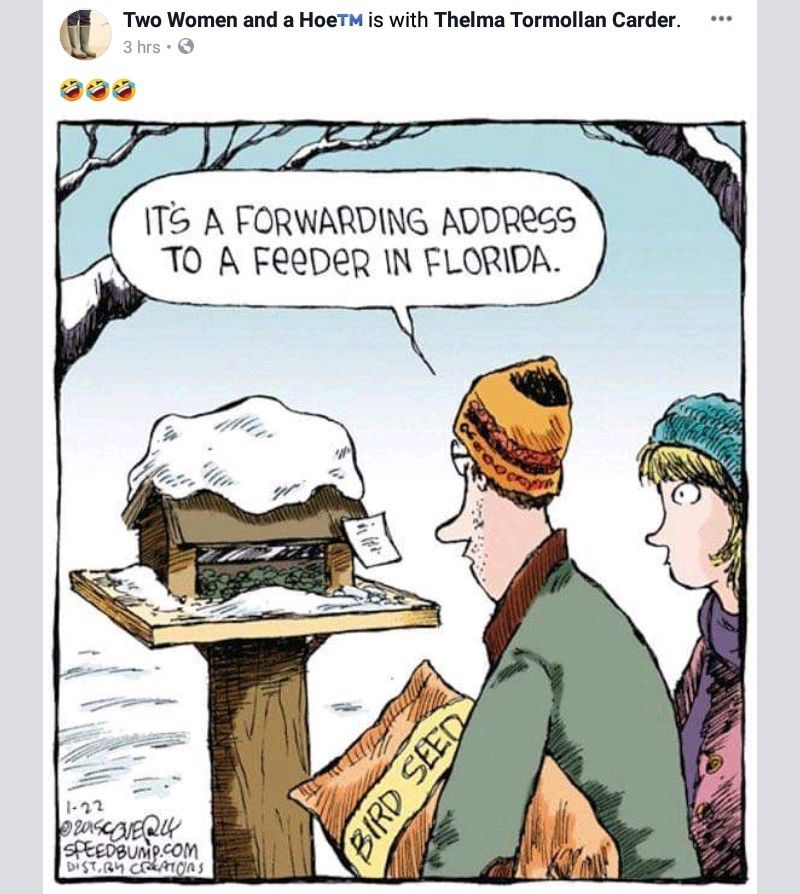 Pin By Pammy Sieminski On Funny Funny Weather Cold Weather Funny Winter Humor