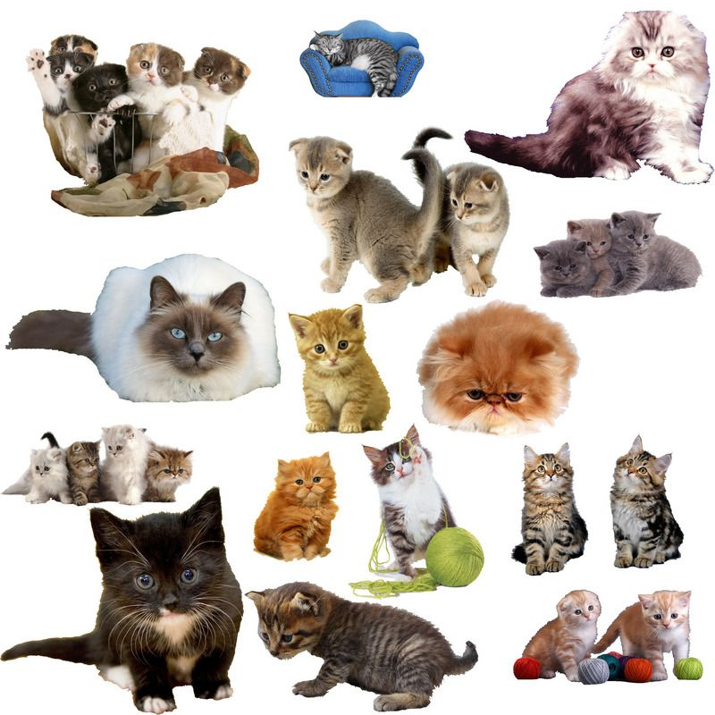Dogs And Cats On A Transparent Background