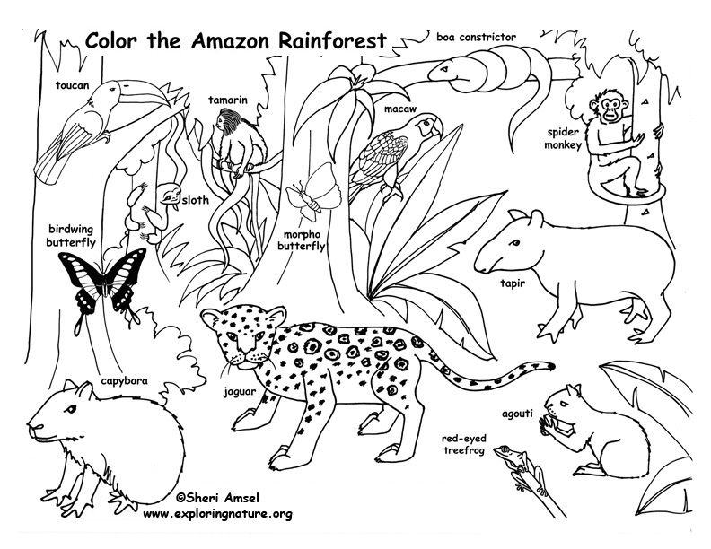 Color And Learn About Habitats On Exploringnature Org Rainforest