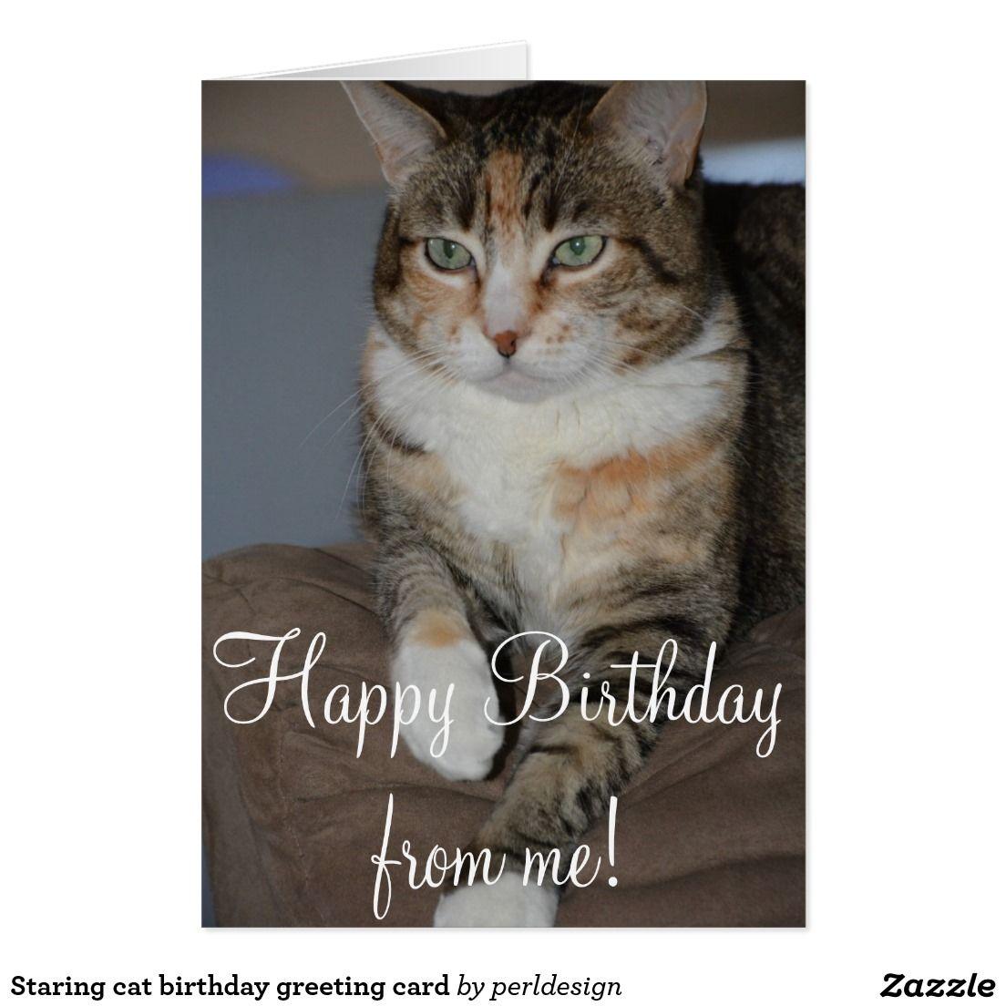 Staring cat birthday greeting card beautiful animals pinterest staring cat birthday greeting card kristyandbryce Gallery