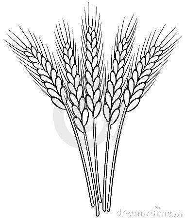 Black White Wheat Ears 19684717 Jpg 381 450 Espiga De Trigo Dibujos Pintura En Tela