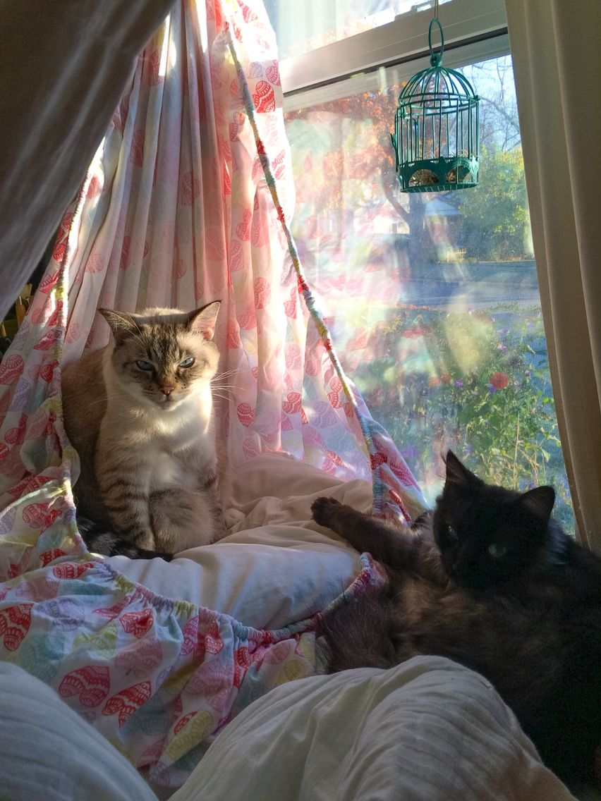 Diy Cat Hammock Gather One End Of A Fitted Sheet Tie And