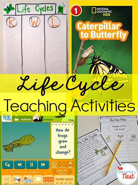 Teaching Life Cycles is part of Teaching life cycle, Science life cycles, Teaching life, Life cycles, Science lessons, Life cycles activities - Find wonderful resources for teaching Life Cycles to your primary students including activities, book suggestions, and noprep products