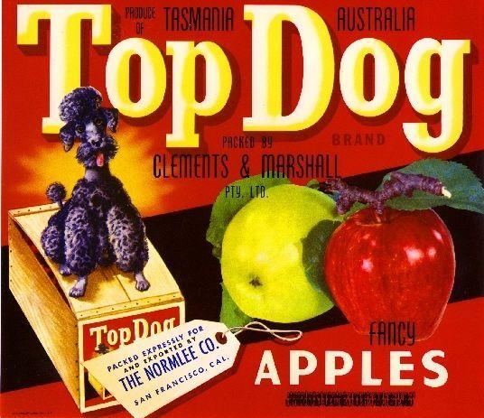 9.59 Tasmania Australia Top Dog Poodle Apple Apples