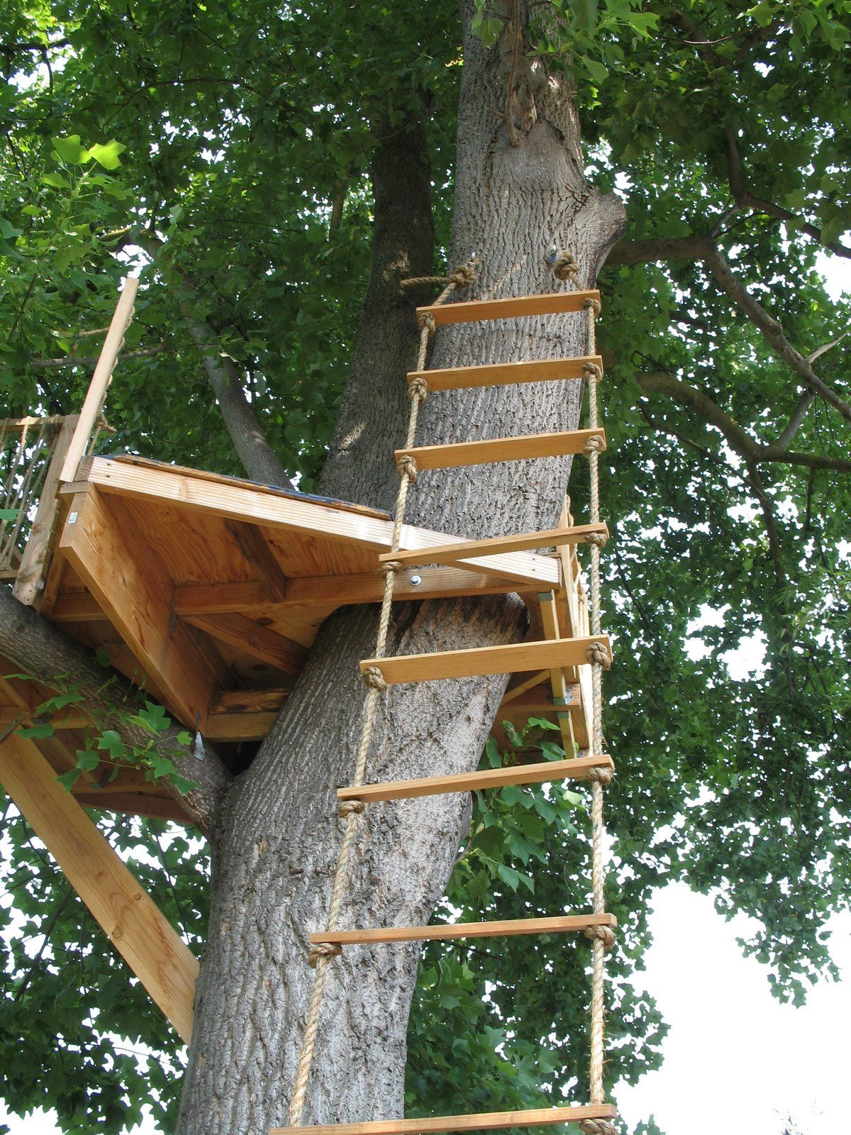 Tree House Phase Two Tree House Tree House Diy Rope Ladder