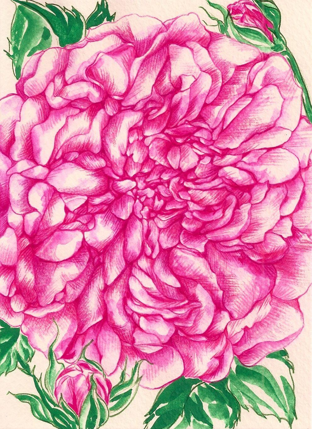 Summer Roses on Behance