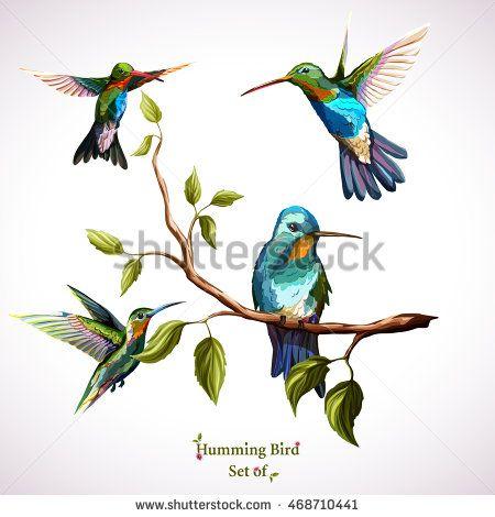 Humming birds. Set of four humming bird. Hand drawn, watercolor.  Vector - stock