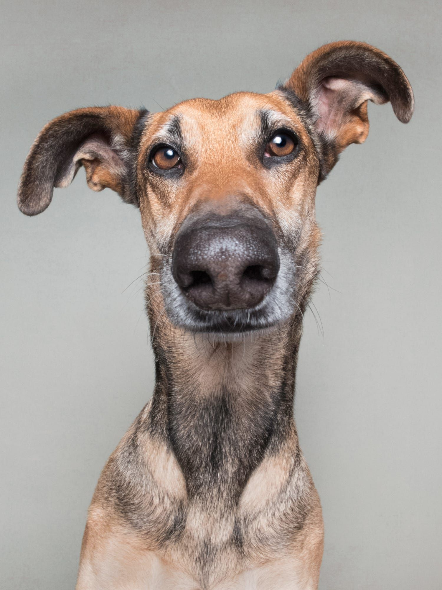 All my pictures here can be licensed. Message info@elkevogelsang.com
