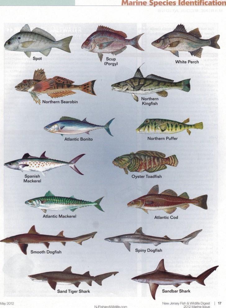 Marine Fisheries Chart Fish Chart Photos Of Fish Fish