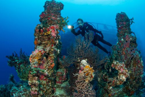 Florida's Coral Reef enhanced-buzz-1730-1371574003-12.jpg (507×338)
