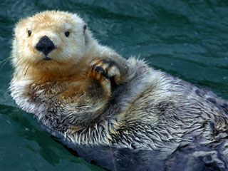 shark week is great but how about otter week otters otters rh pinterest com