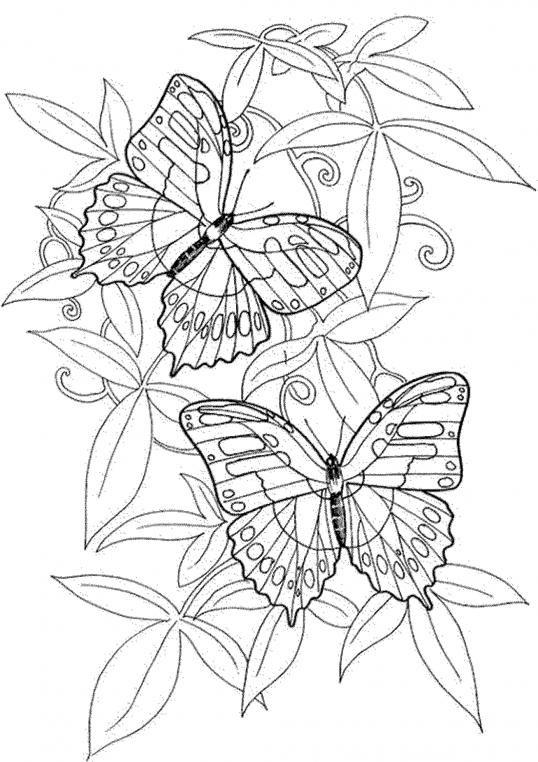 coloring pages butterflies for adults butterfly coloring